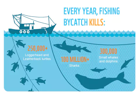 bycatch.png