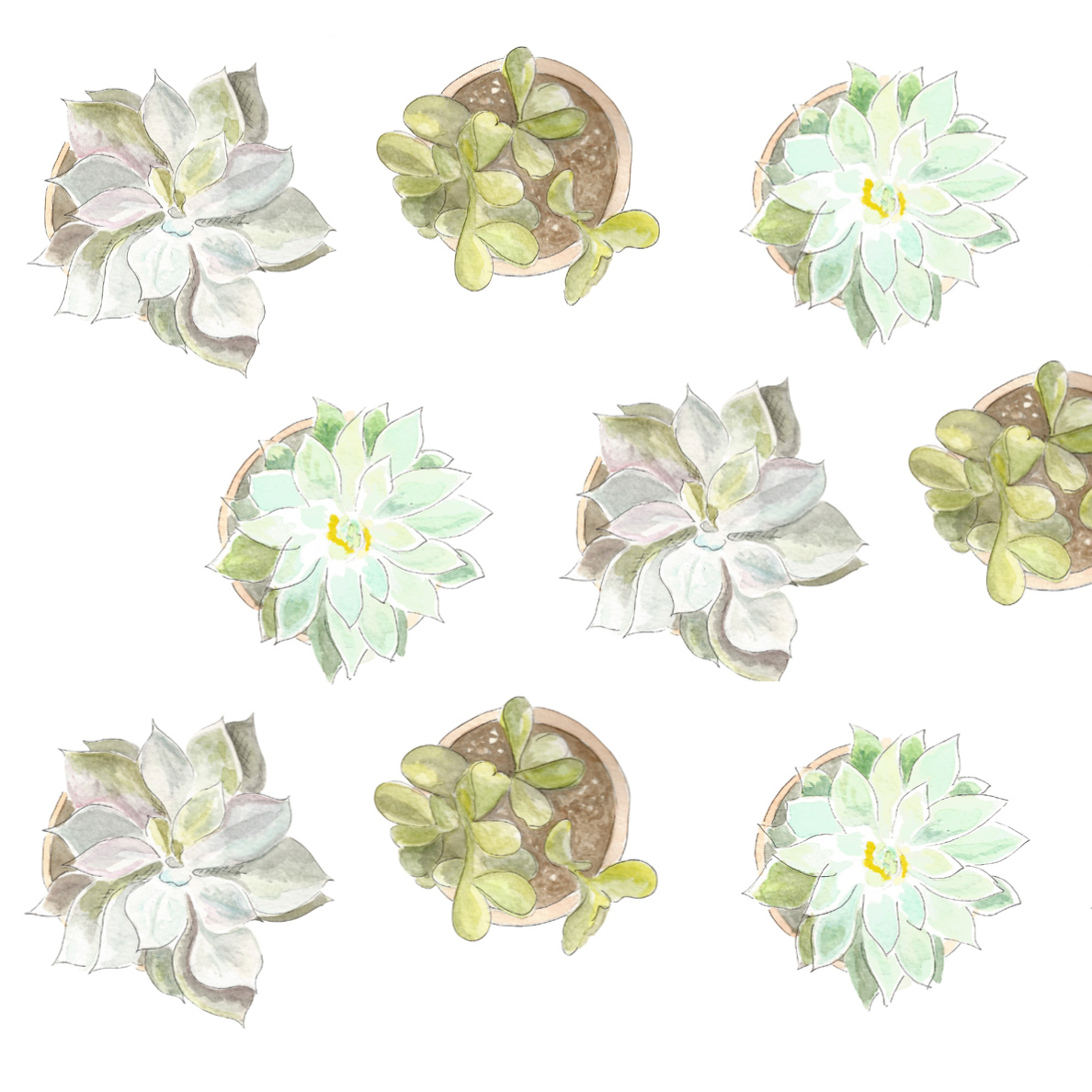 succulentspattern.jpg