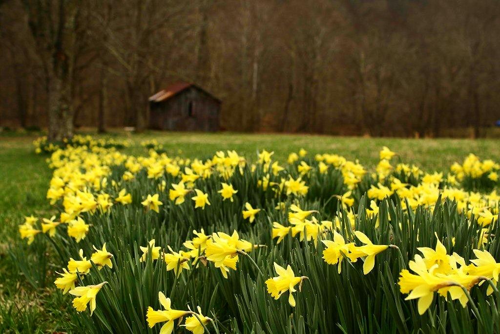 Sustainability Starts at...   Stoney Mountain Farm    About Us