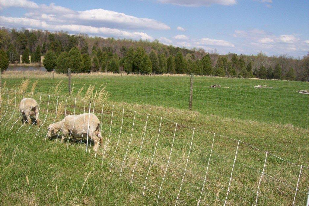 April 2009 024.jpg
