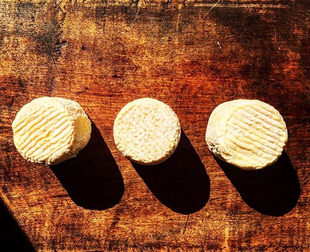 Le Petit Catenoz (Le Tarentais?). . . . . . #chevre #fromage #cheese #rubiners #laitcru #rawmilk #food52grams #rubiners #goatcheese