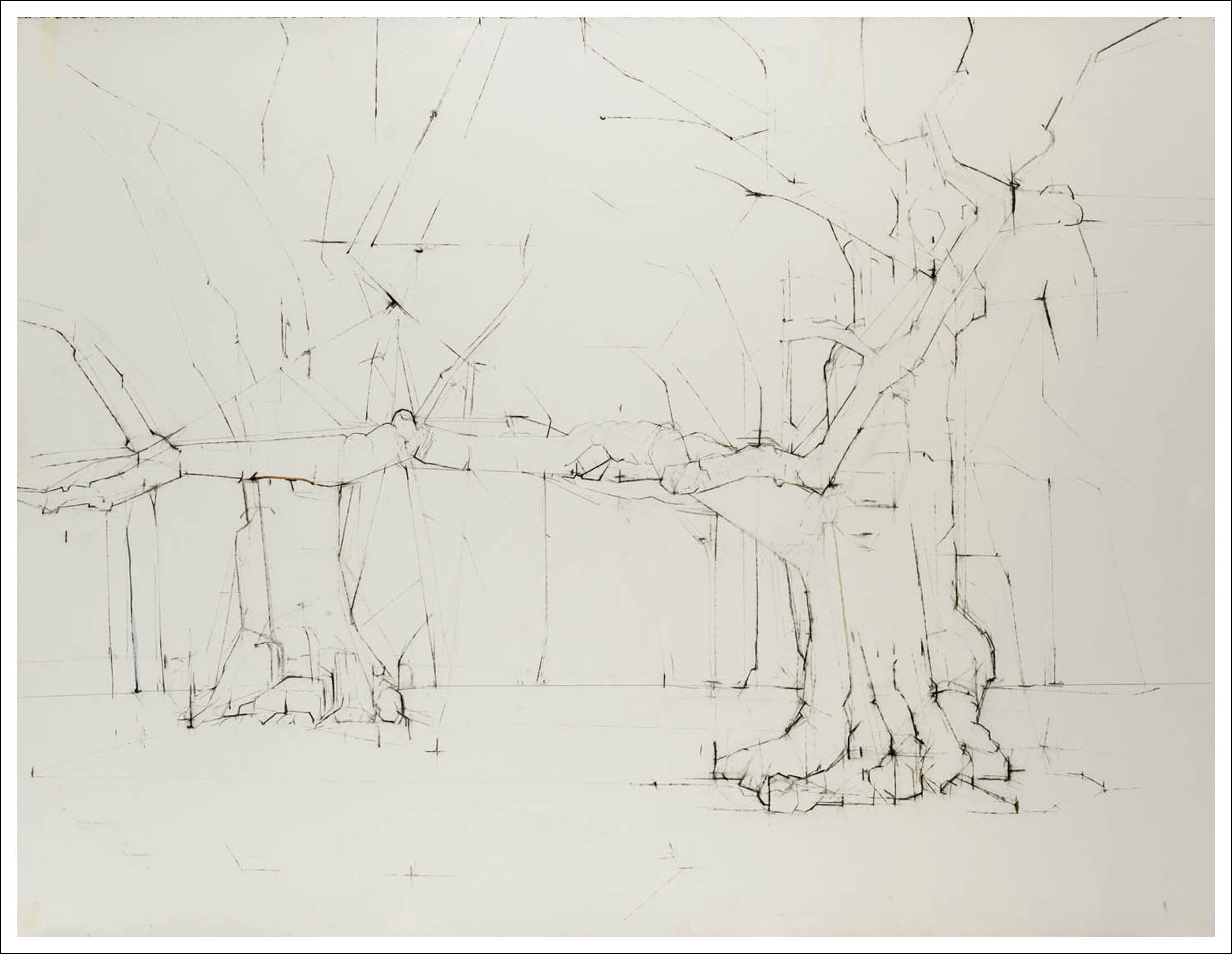 """Quercus Rubra L. 344° 40° 47' 21.1"""" N 73° 57' 34.6"""" W , 2009, Charcoal, pencil on paper (38.25 inchesx 50 inches)"""