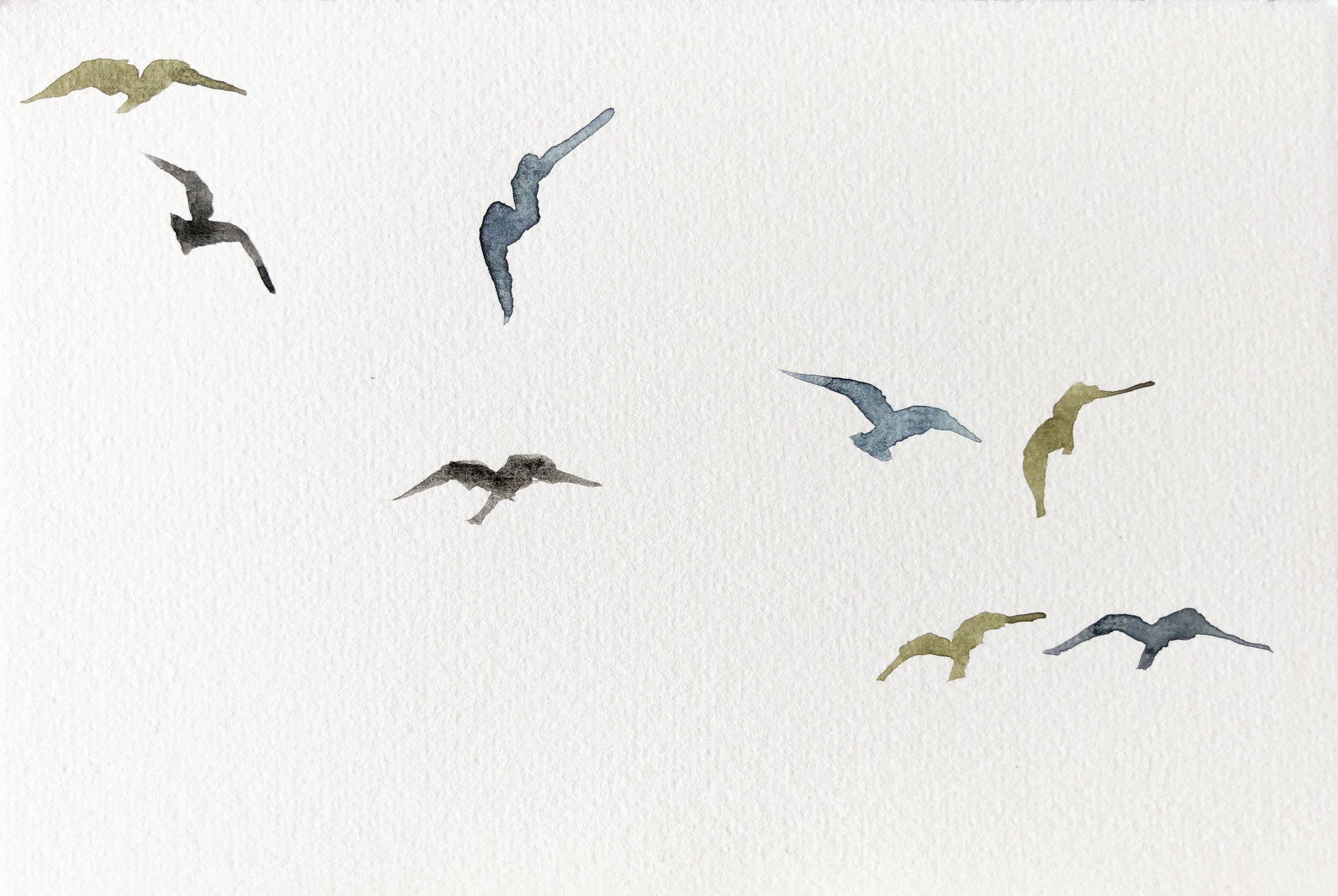 Birds XXVI