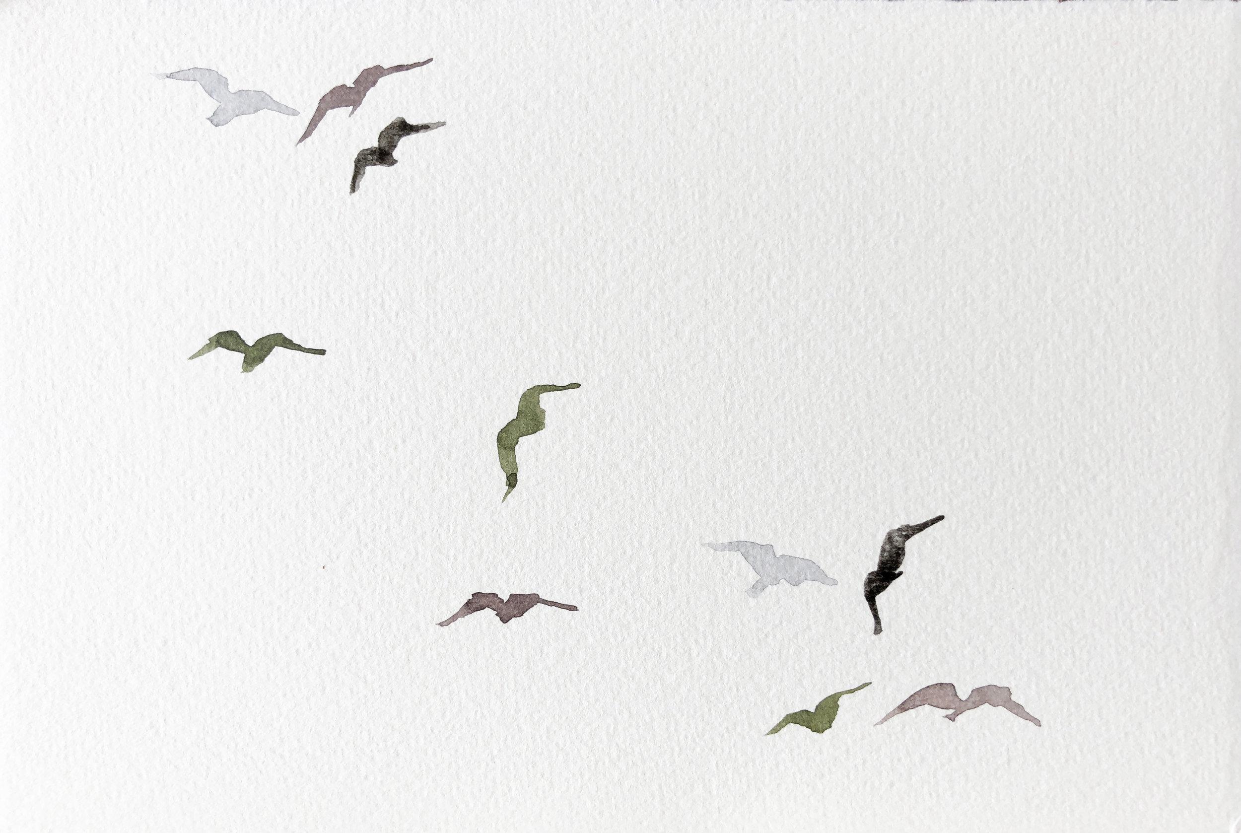 Birds XXVIII