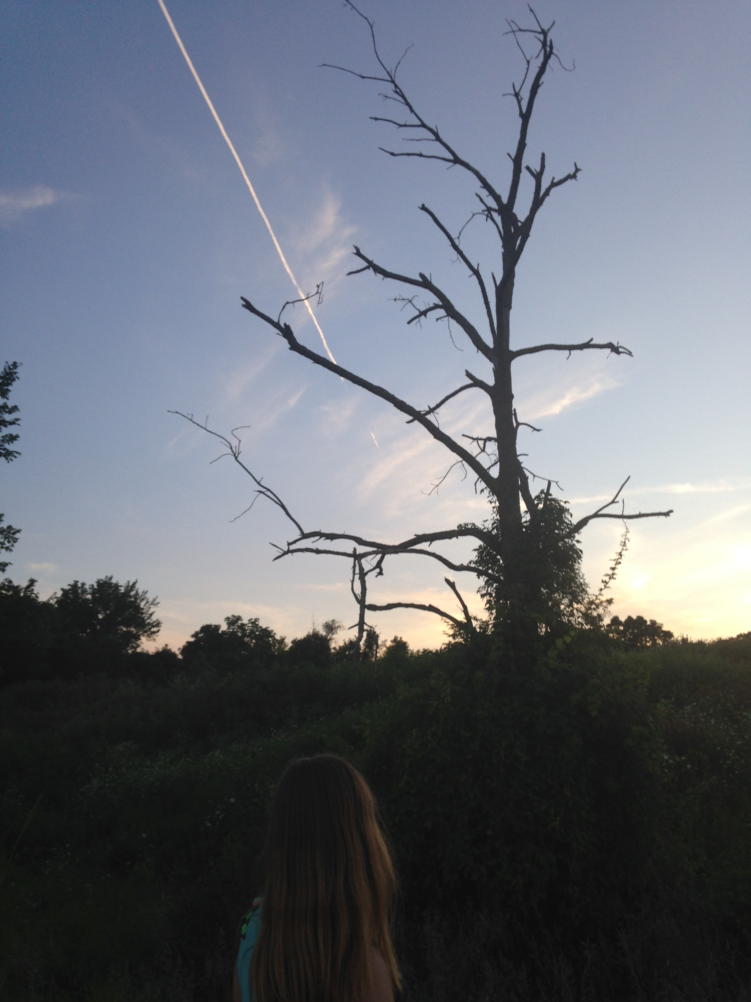 Ashlee-Looking-at-Dead-Tree-and-Sky.jpg
