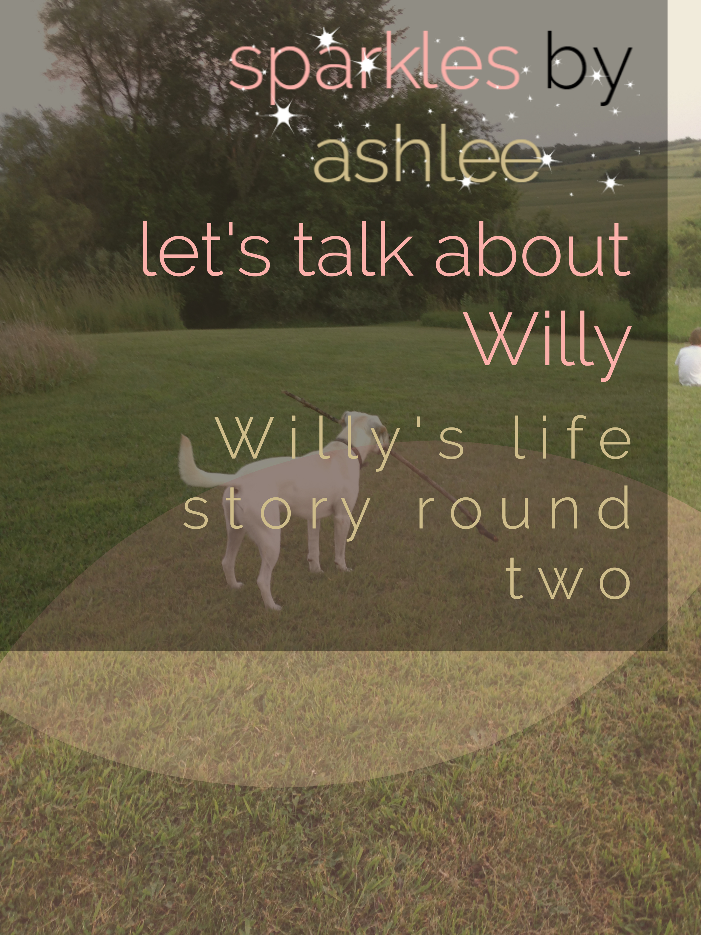 Lets-Talk-About-Willy-Sparkles-by-Ashlee.jpg