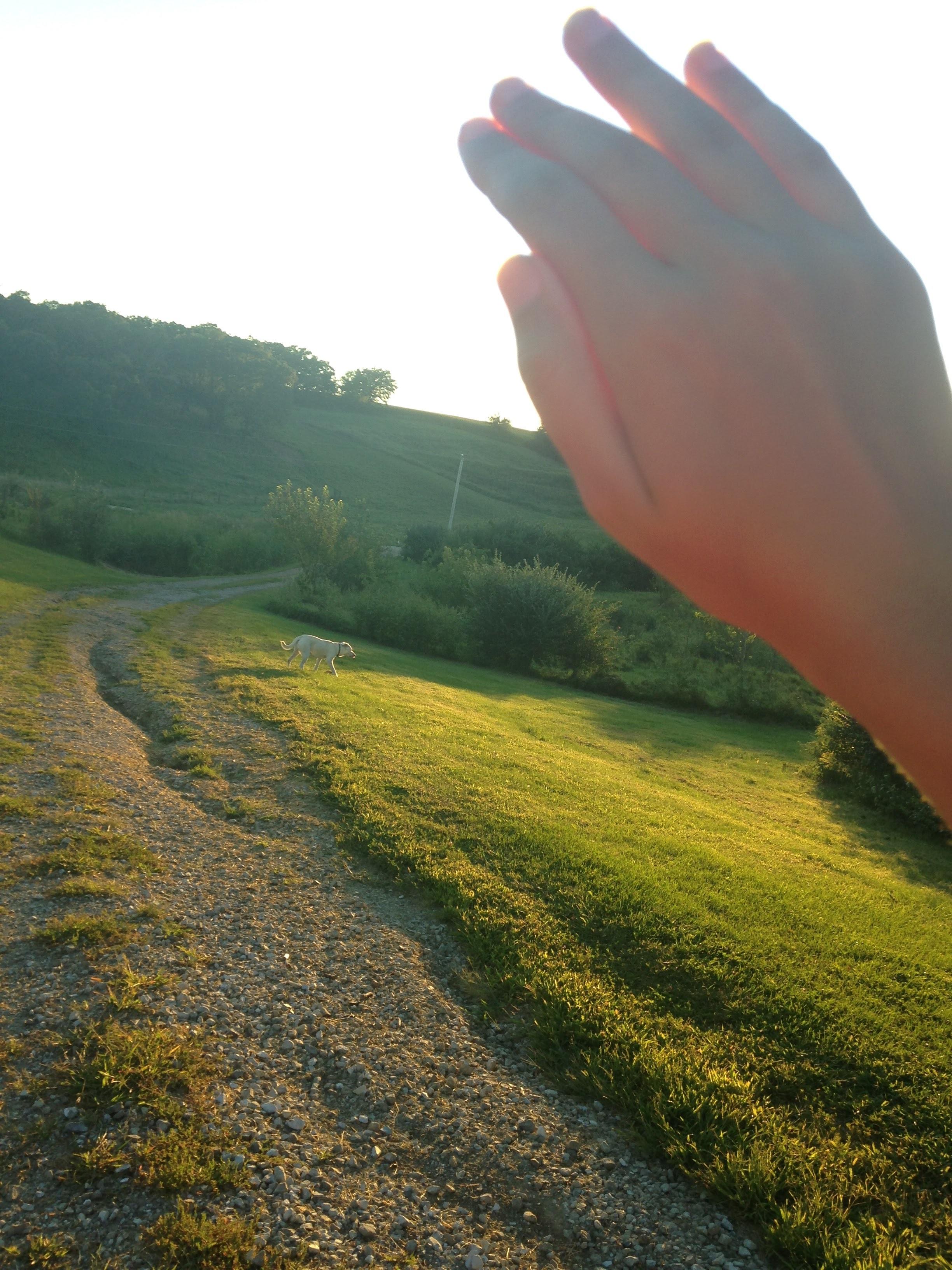 Sunshine-While-Walking.jpg