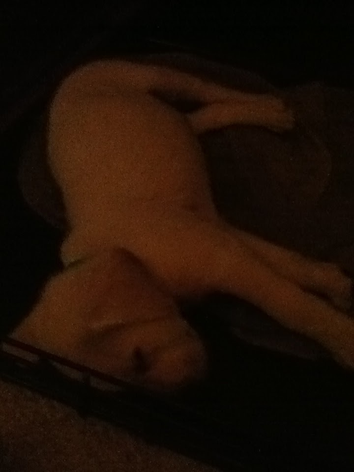 Baby Willy in his kennel on the first night! Sorry for the poor quality!