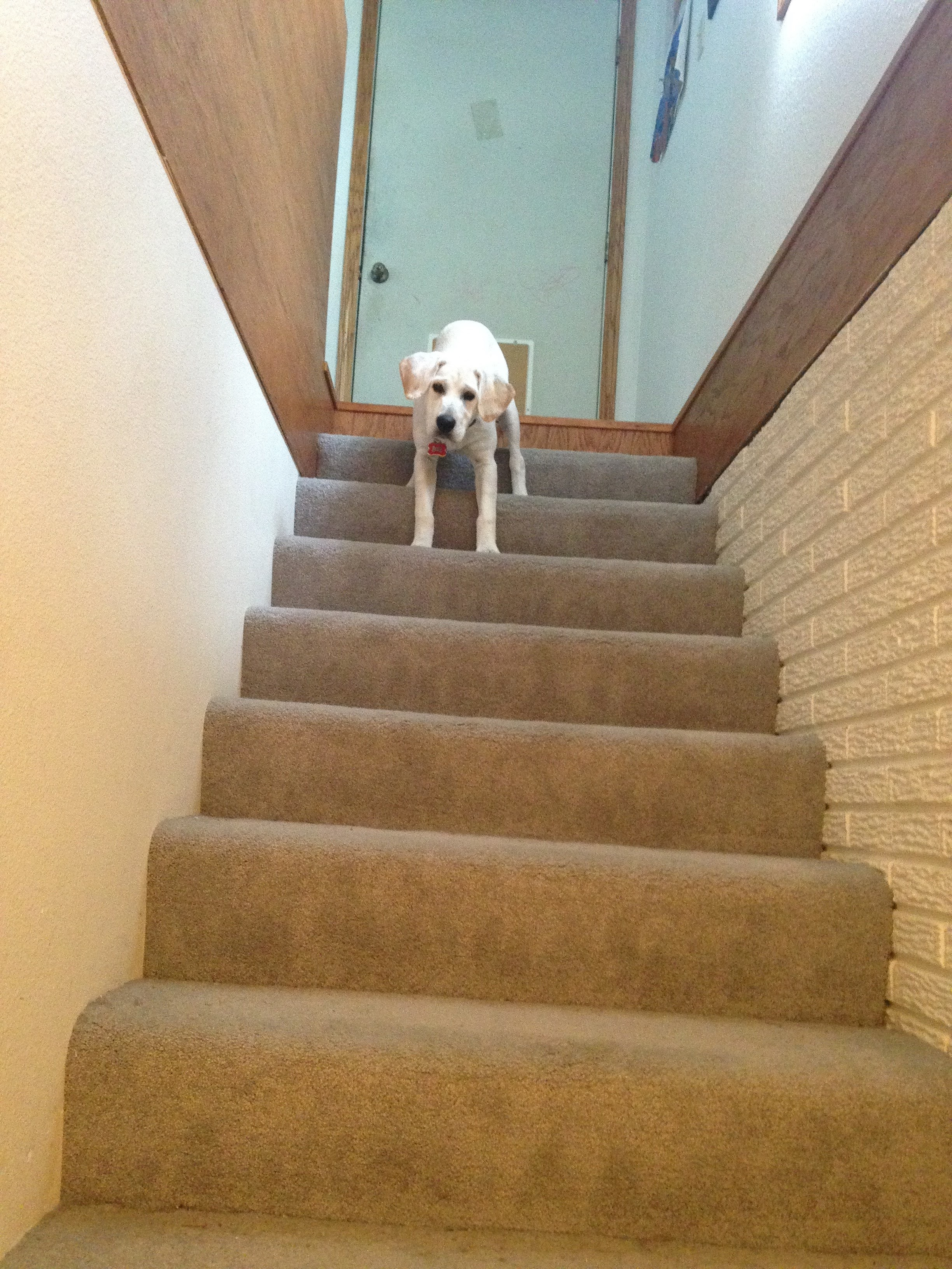 This was when he was learning to go down the stairs. Mom would not approve of that.