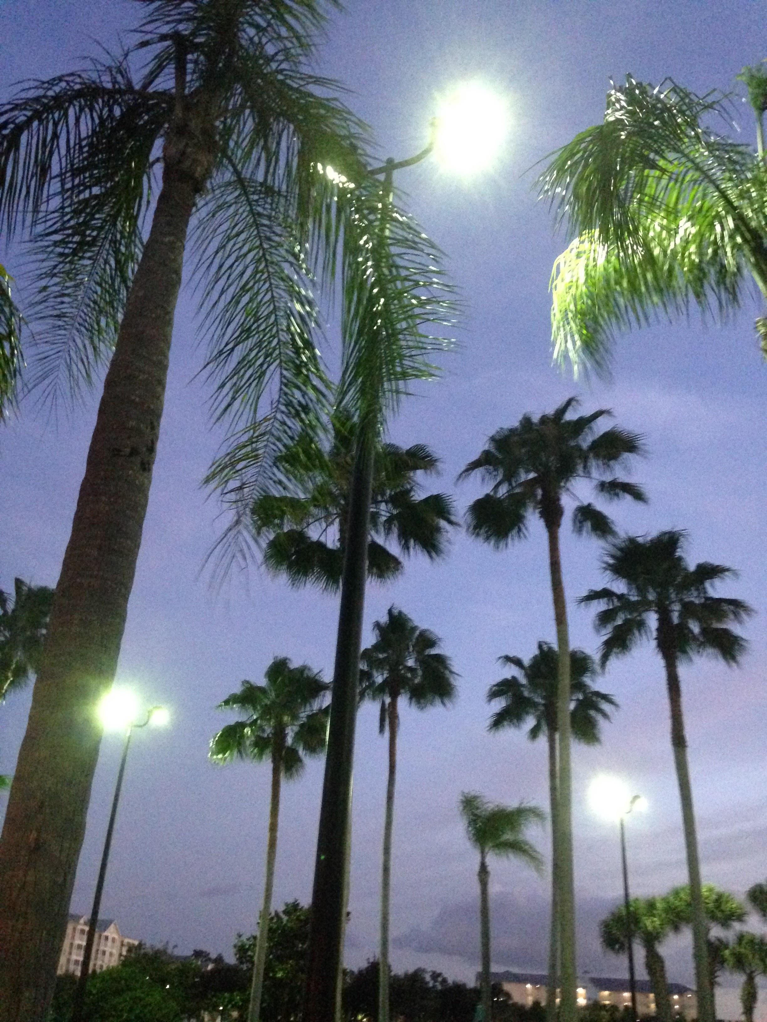 Florida-Palm-Trees.jpg