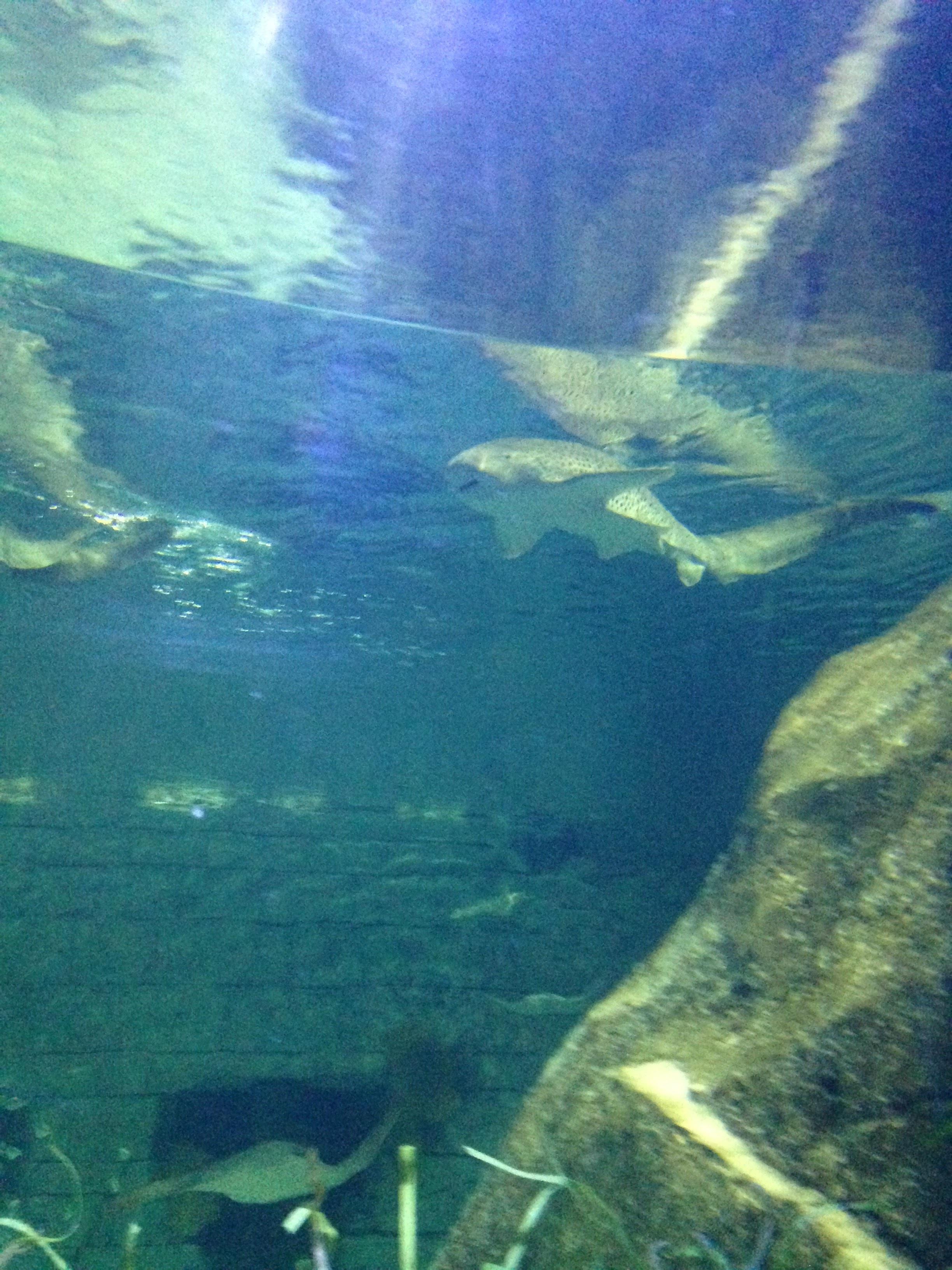 SeaWorld-Shark.jpg