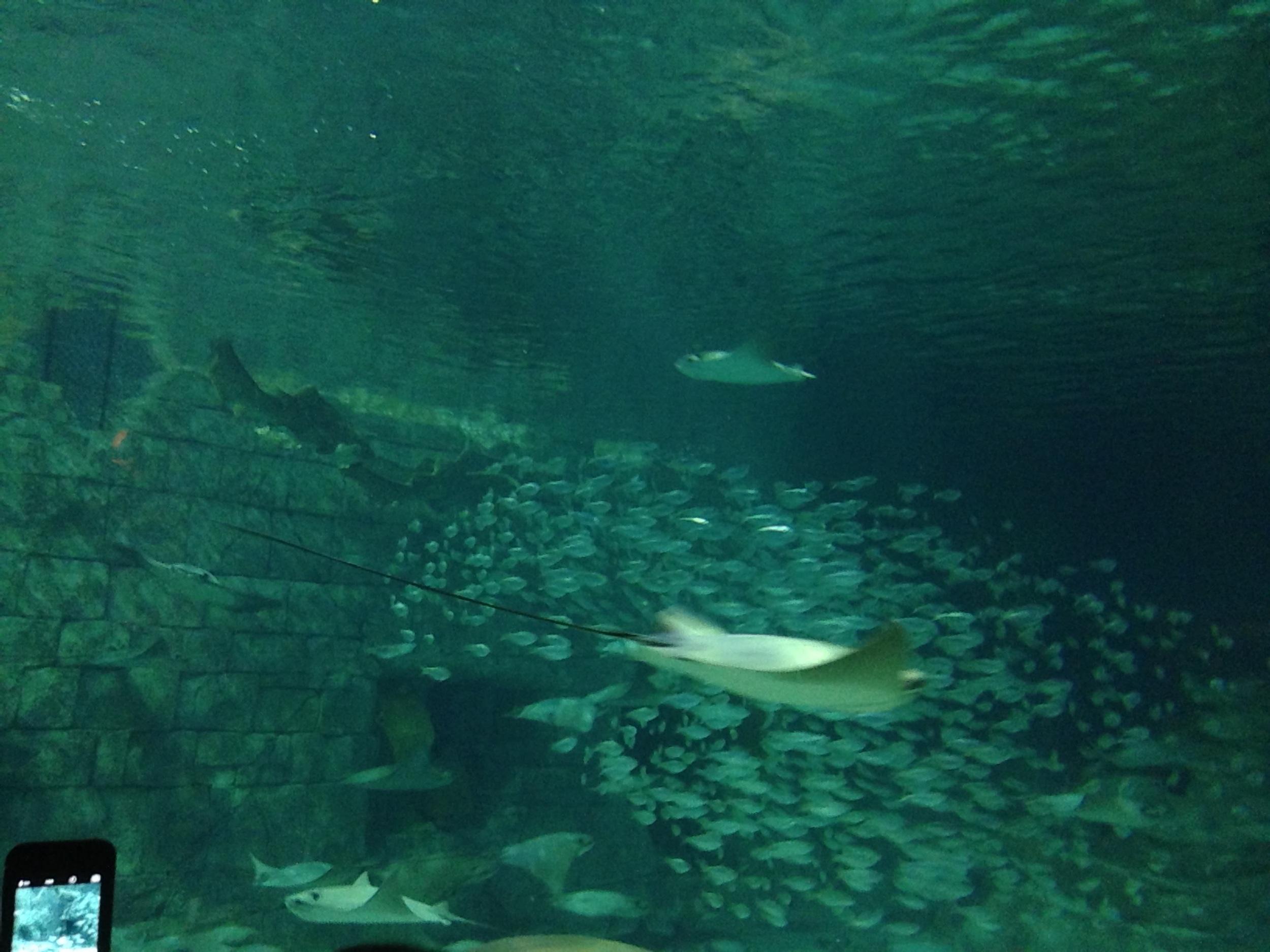 SeaWorld-Fish.jpg