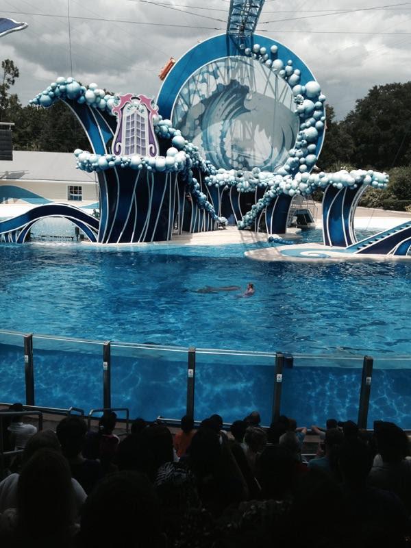 SeaWorld-Dolphin-Show.jpg