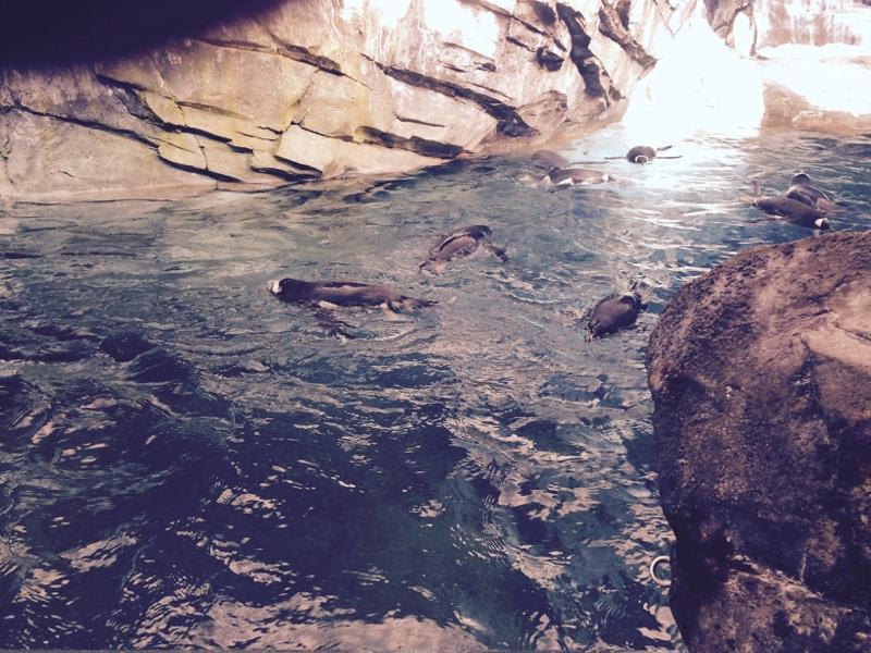 SeaWorld-Penguins.jpg