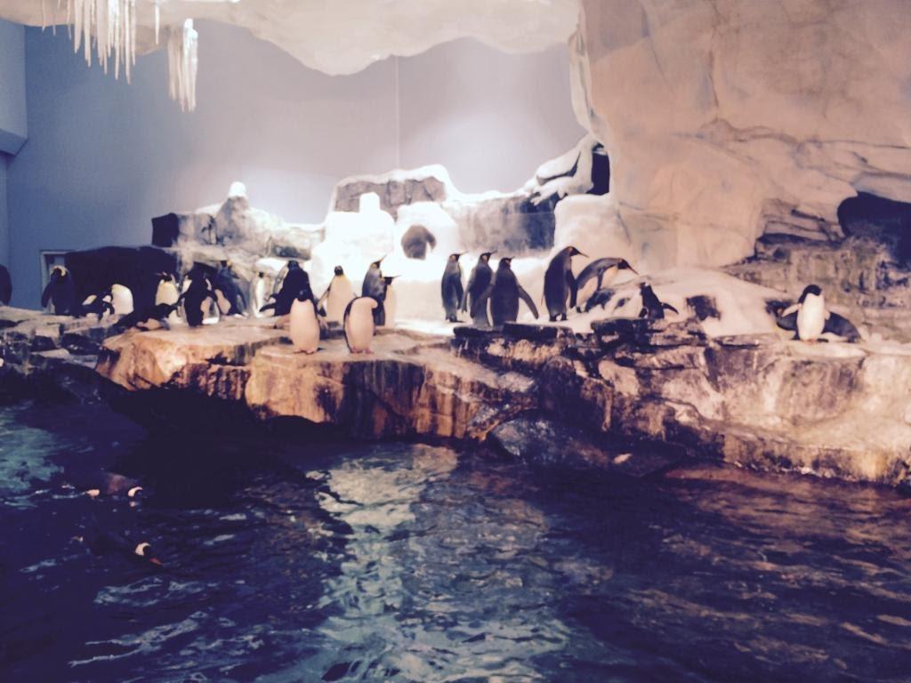 SeaWorld-Penguins2.jpg