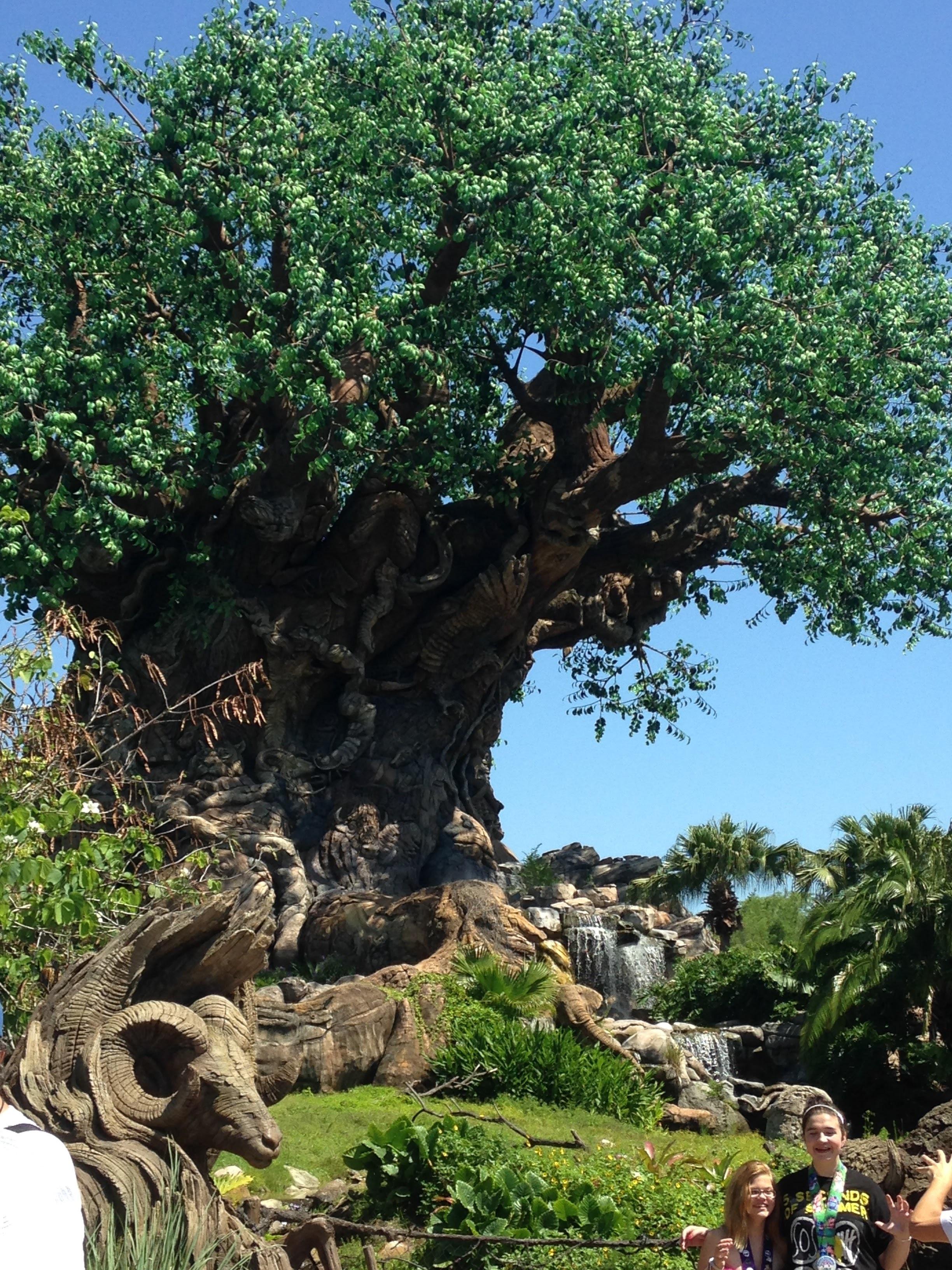 Animal-Kingdom-Tree.jpg