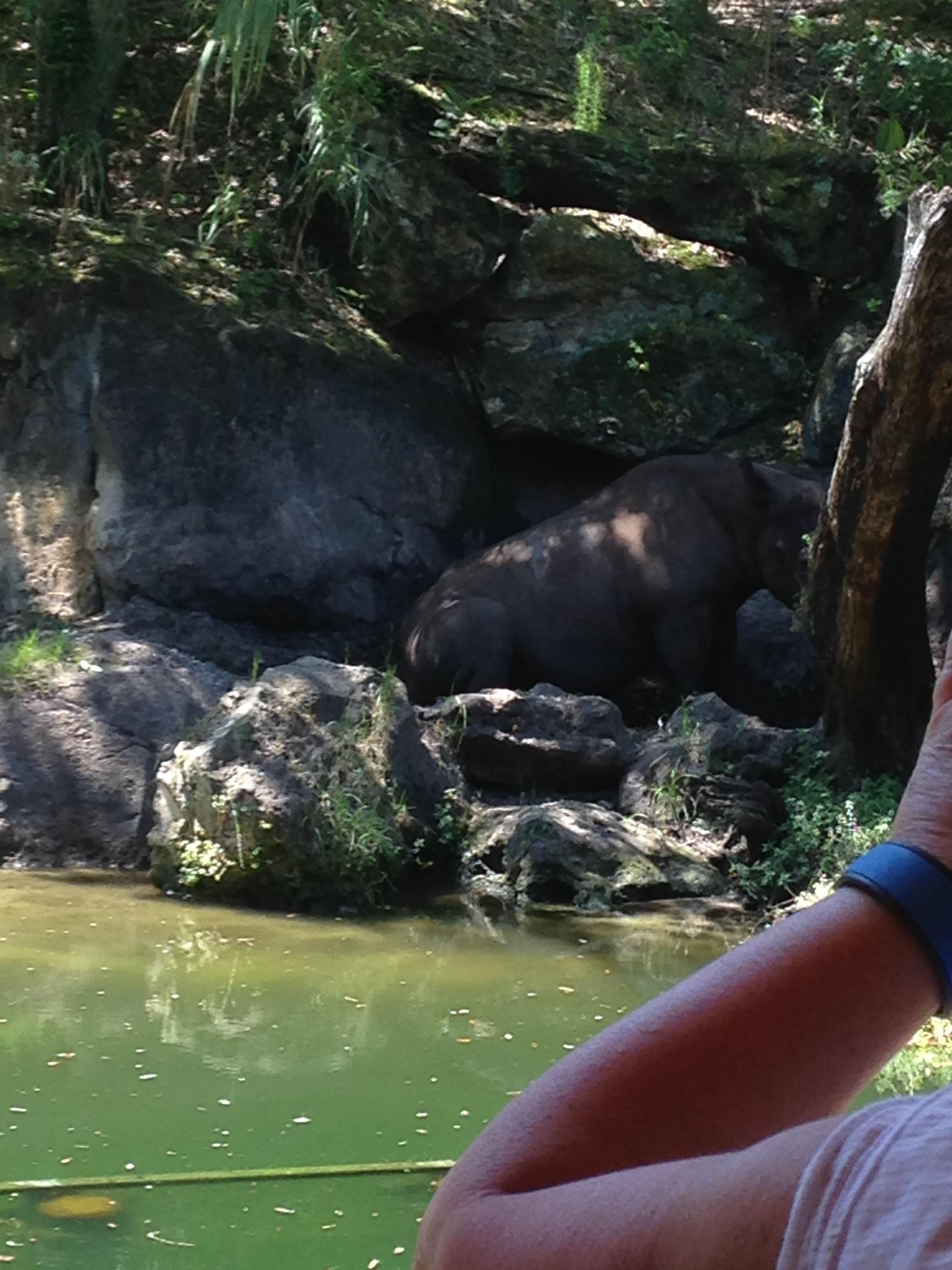 Animal-Kingdom-Hippo.jpg