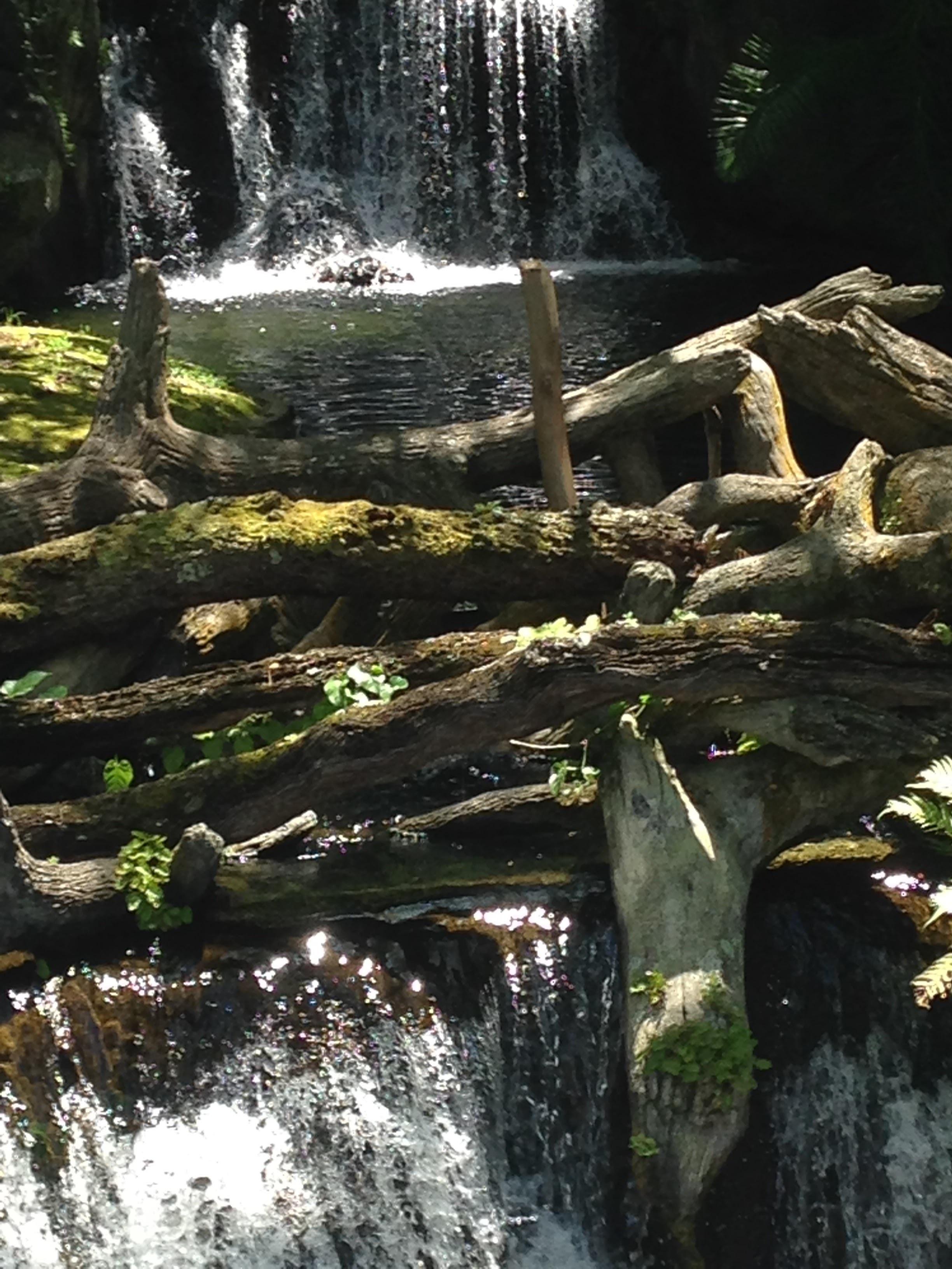 Animal-Kingdom-Waterfall.jpg