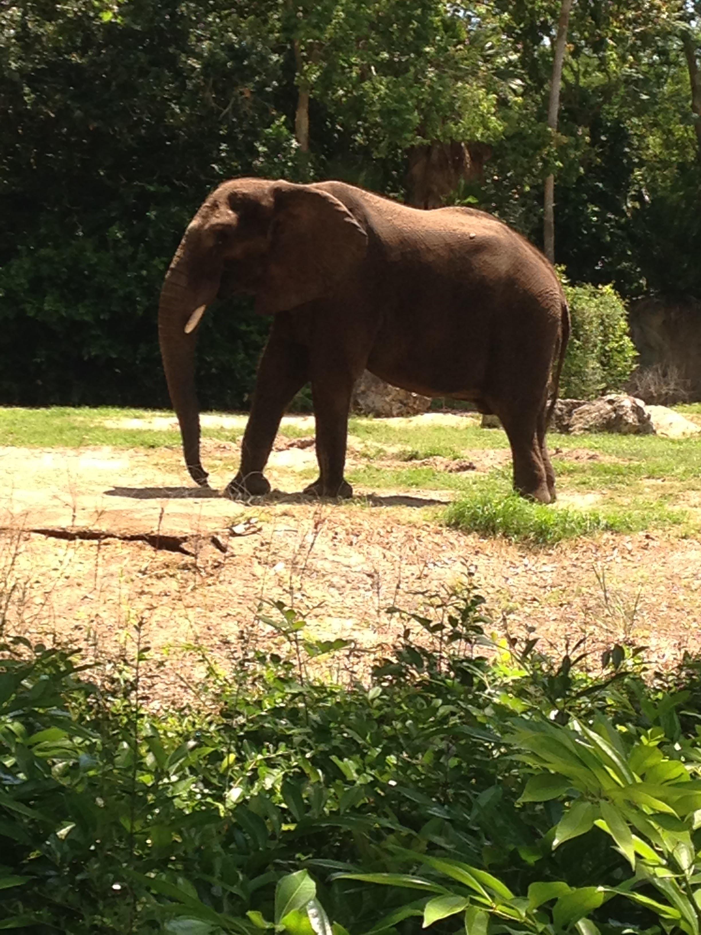 Animal-Kingdom-Elephant.jpg