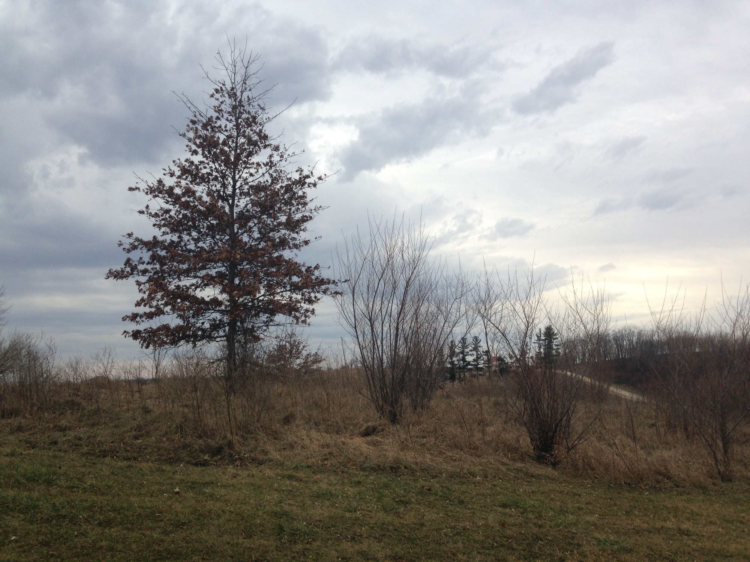 Ashlee-Property-Cloudy.jpg