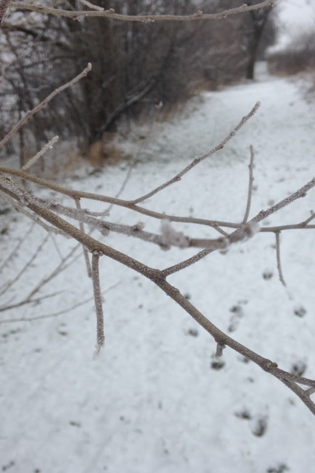 Winter-Day-Branch.jpg