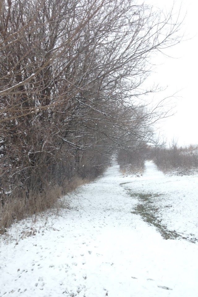 Winter-Day-Trails.jpg