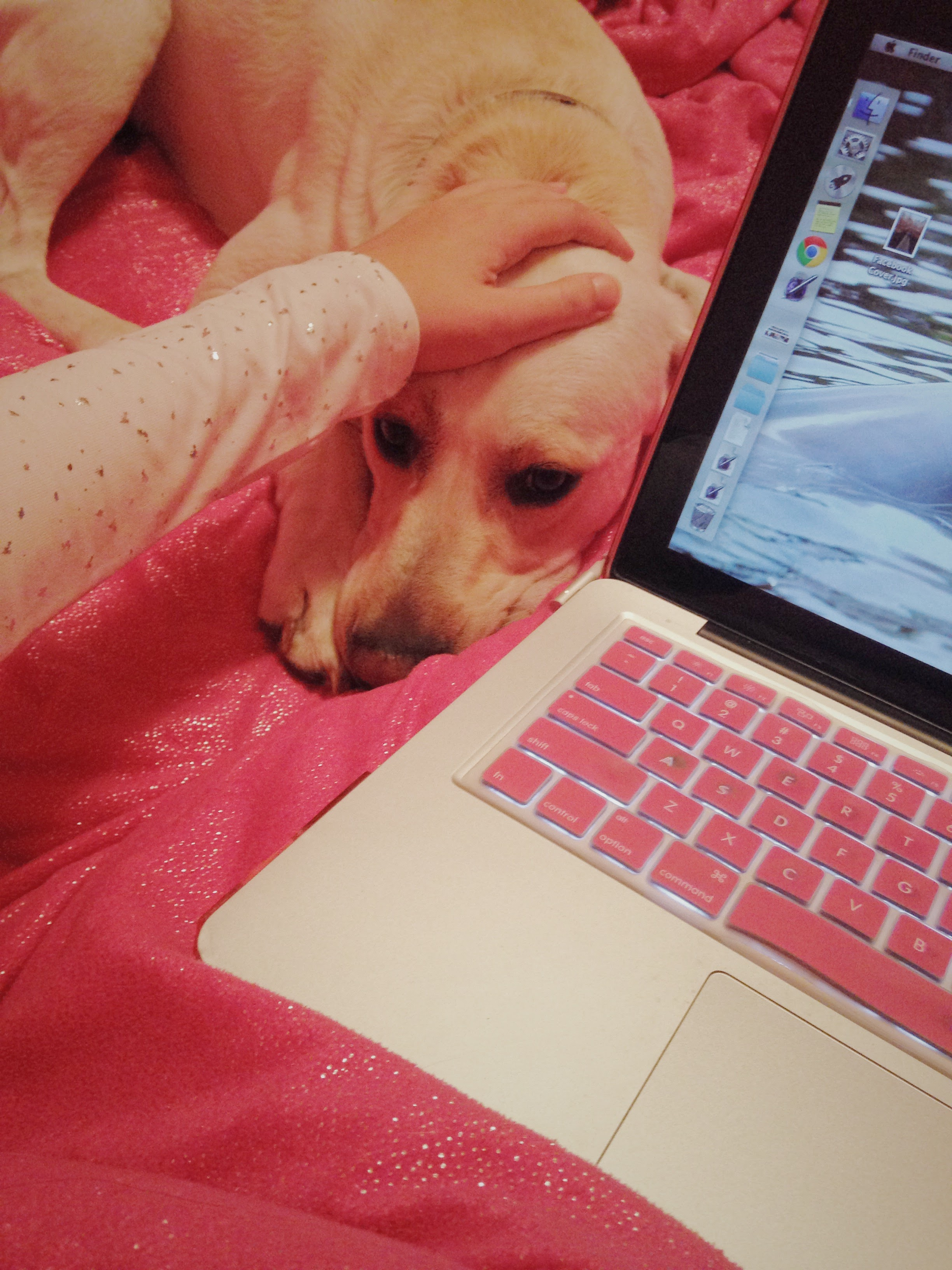 Ashlee-Petting-Willy-Blogging.jpg