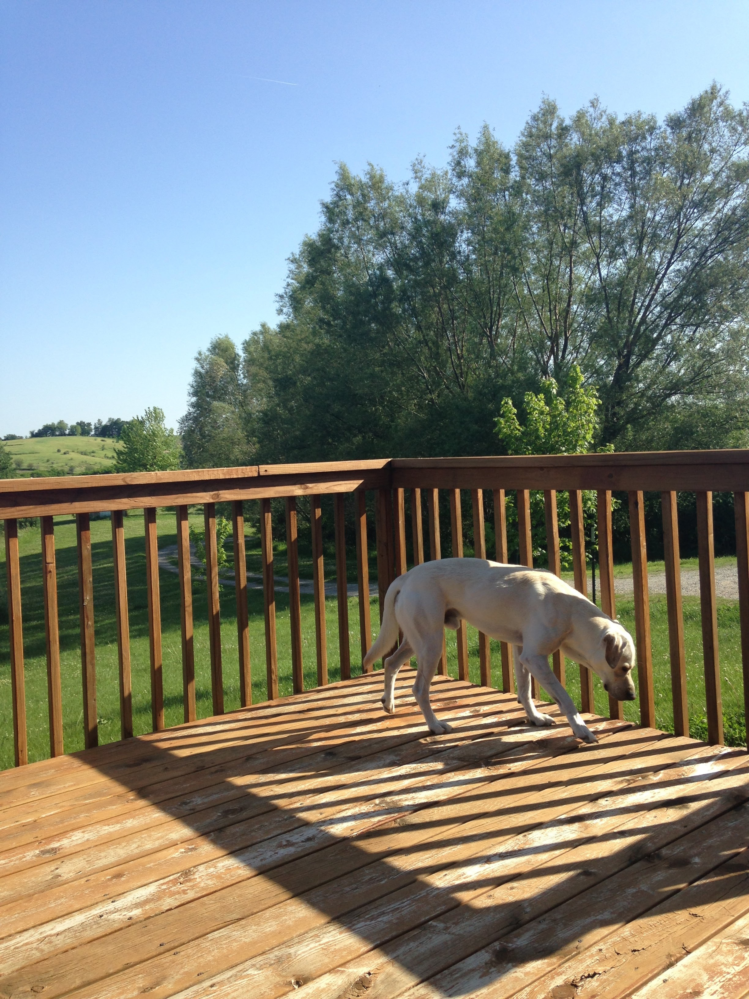 Willy-on-the-Deck.jpg