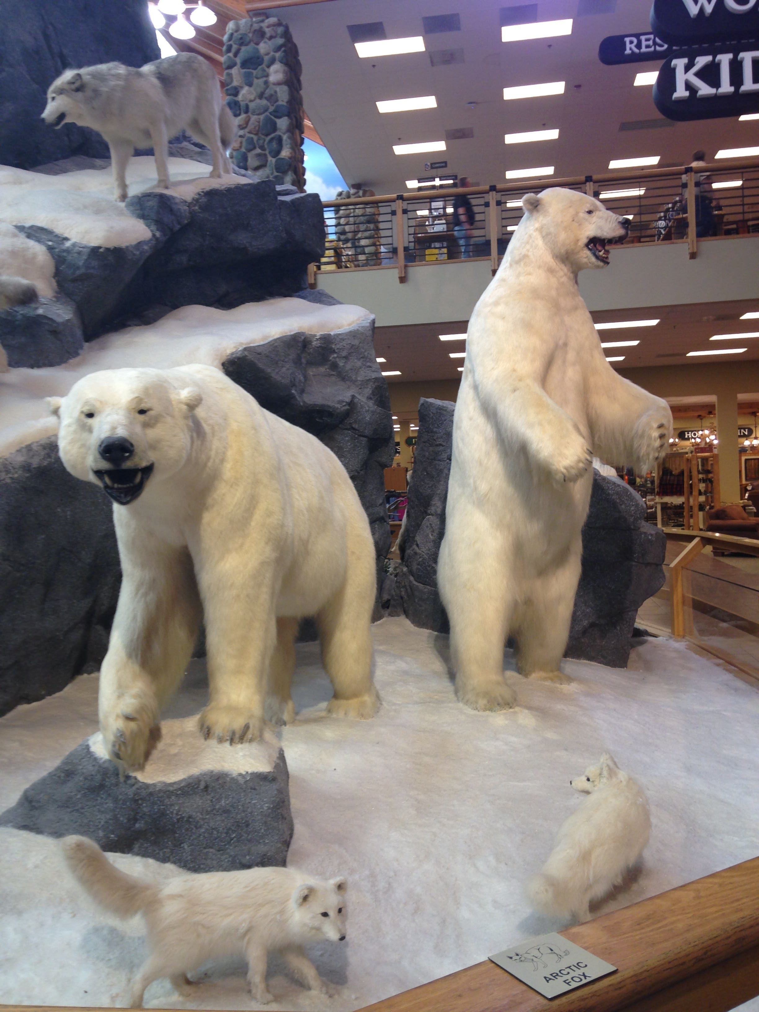 Cabelas-Polar-Bears.jpg