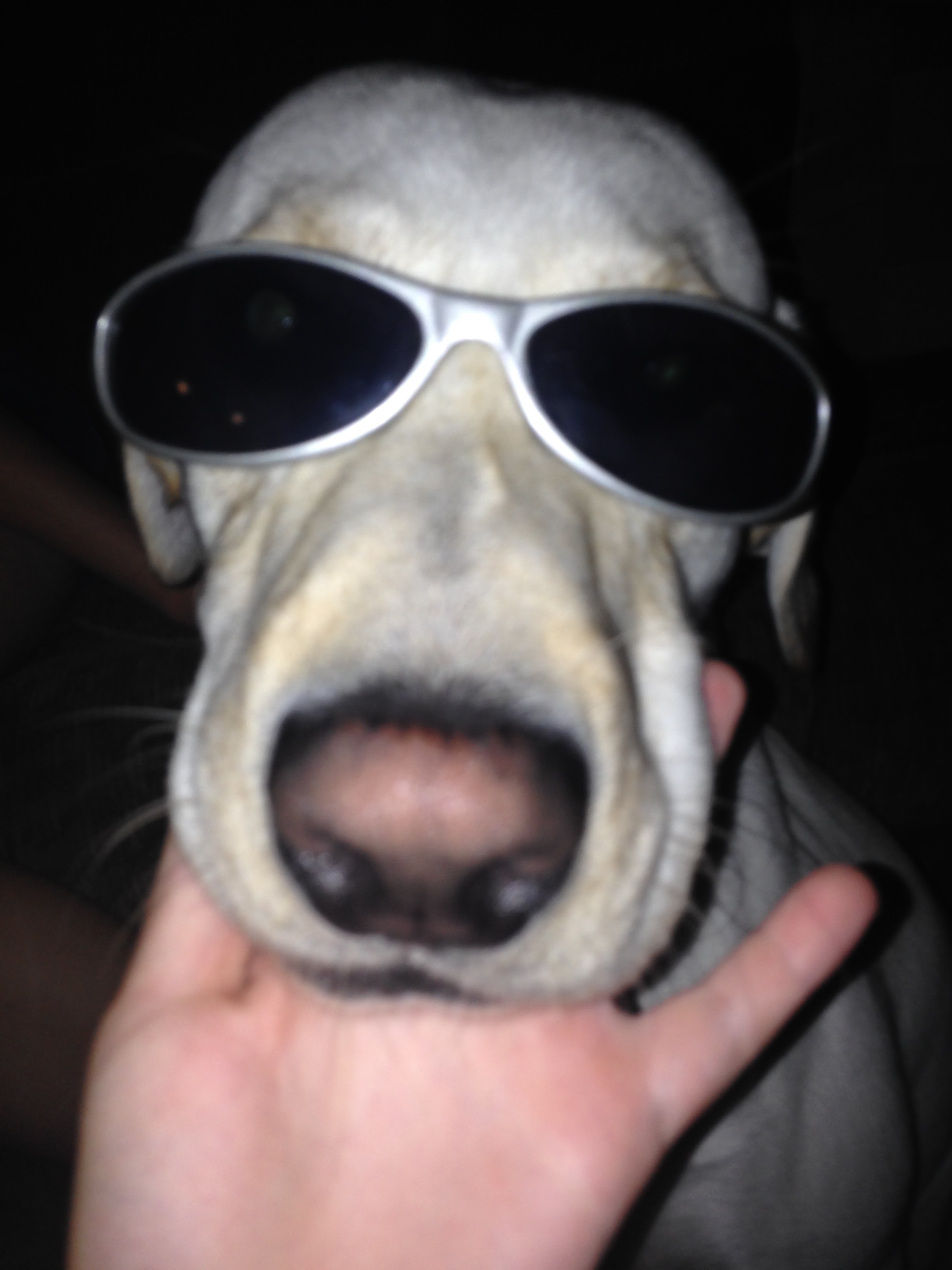 Willy-Dog-with-Sunglasses.jpg