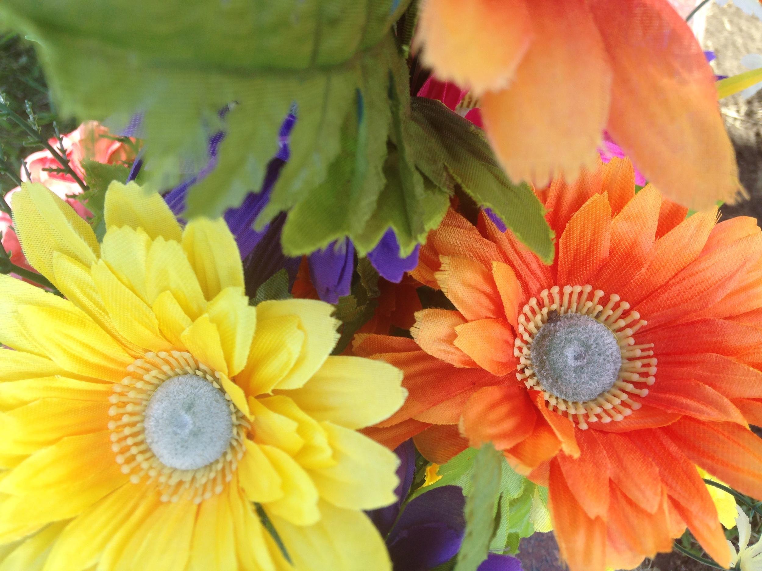 Vibrant-Flowers.jpg