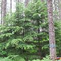 Thumb-Forest-Grove.jpg