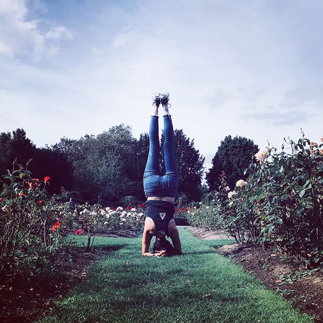 Everything is coming up roses. . . . #yoga #yogalife #yogadaily #yogainspiration #yogaeverydamnday #hotyoga  #instayoga #yogateacher  #turnthemagicup #cambridge #cambridgeyoga #yogapants #instagood #love  #asana #yogamom #yogafit #yxe #camyogis #45 #ukyoga #london #roses #theuplifestyle