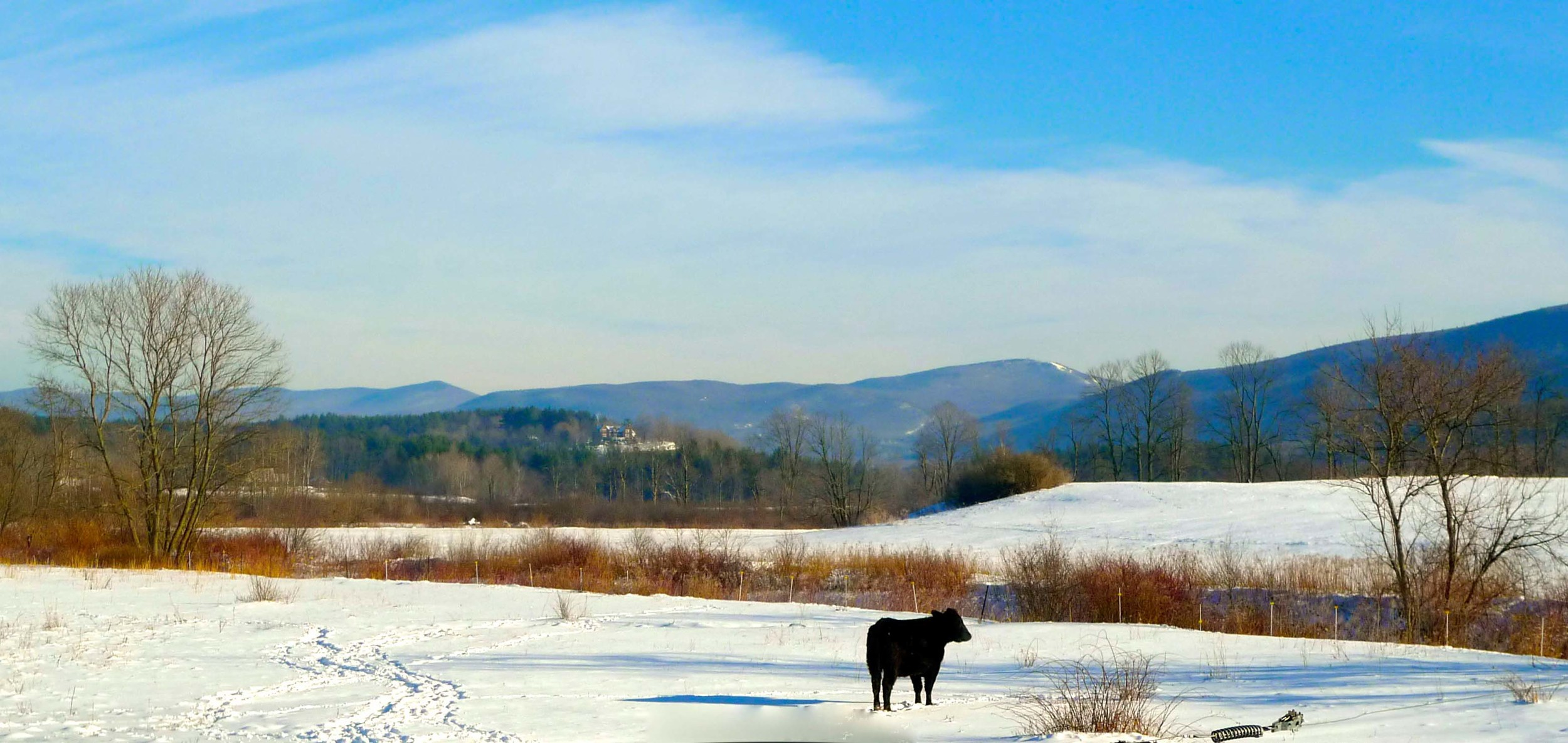 Cow and Bromley winter SKOUG.jpg