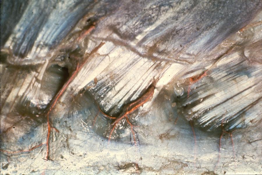 fascia1