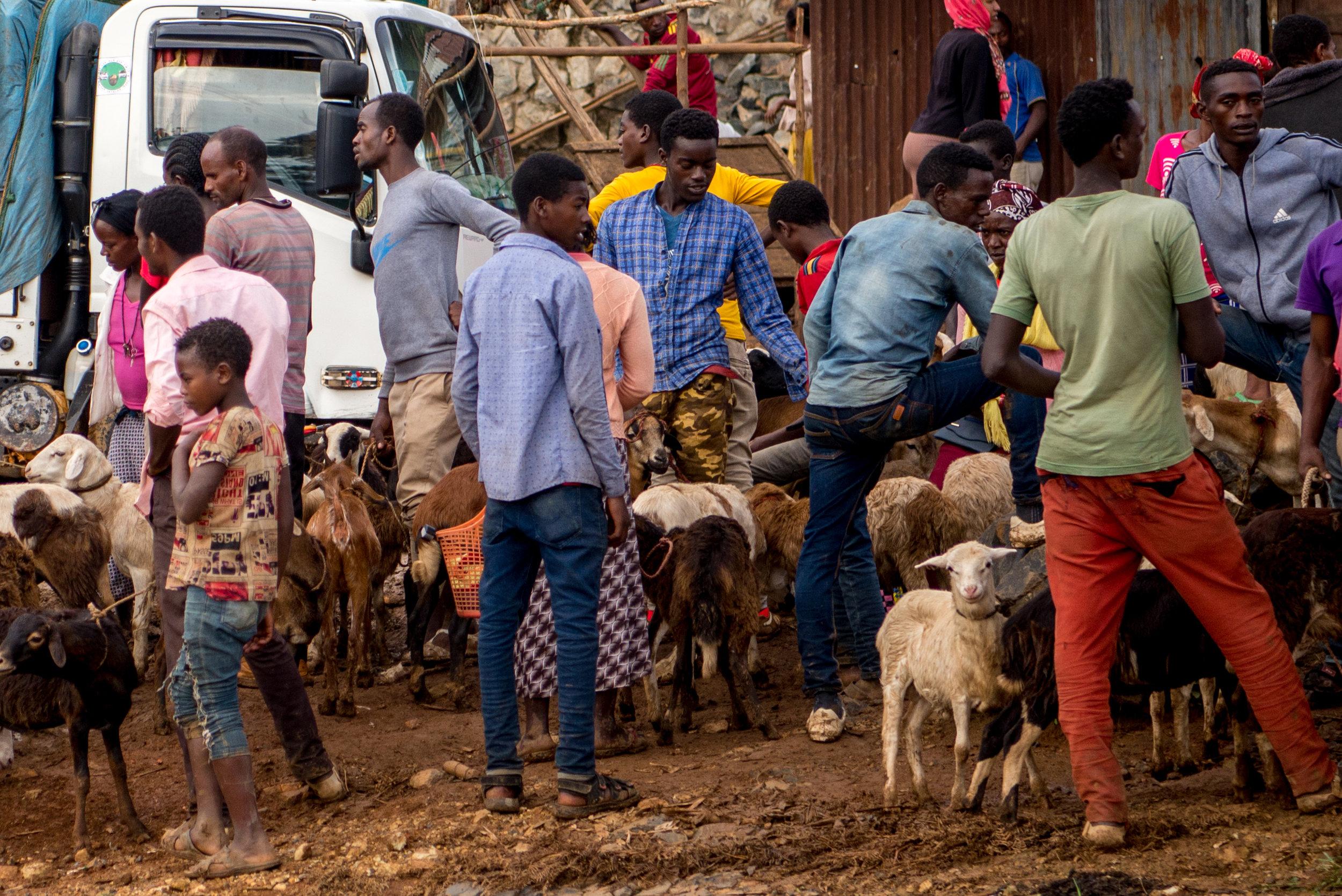 Roadside sheep market