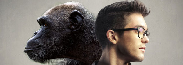 Jason Khoo - Chimpanzees vs Humans