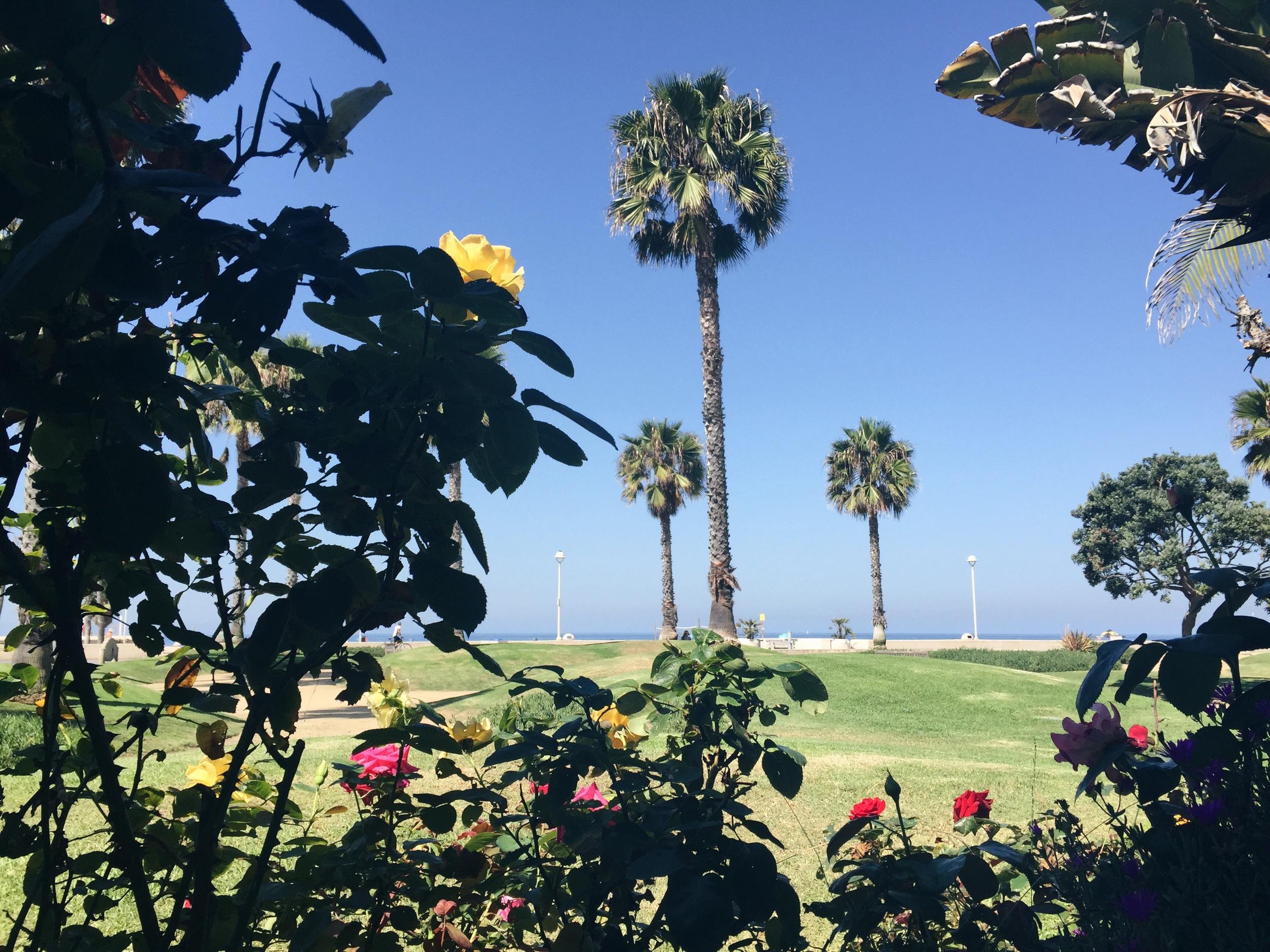 view from breakfast - hermosa beach, CA