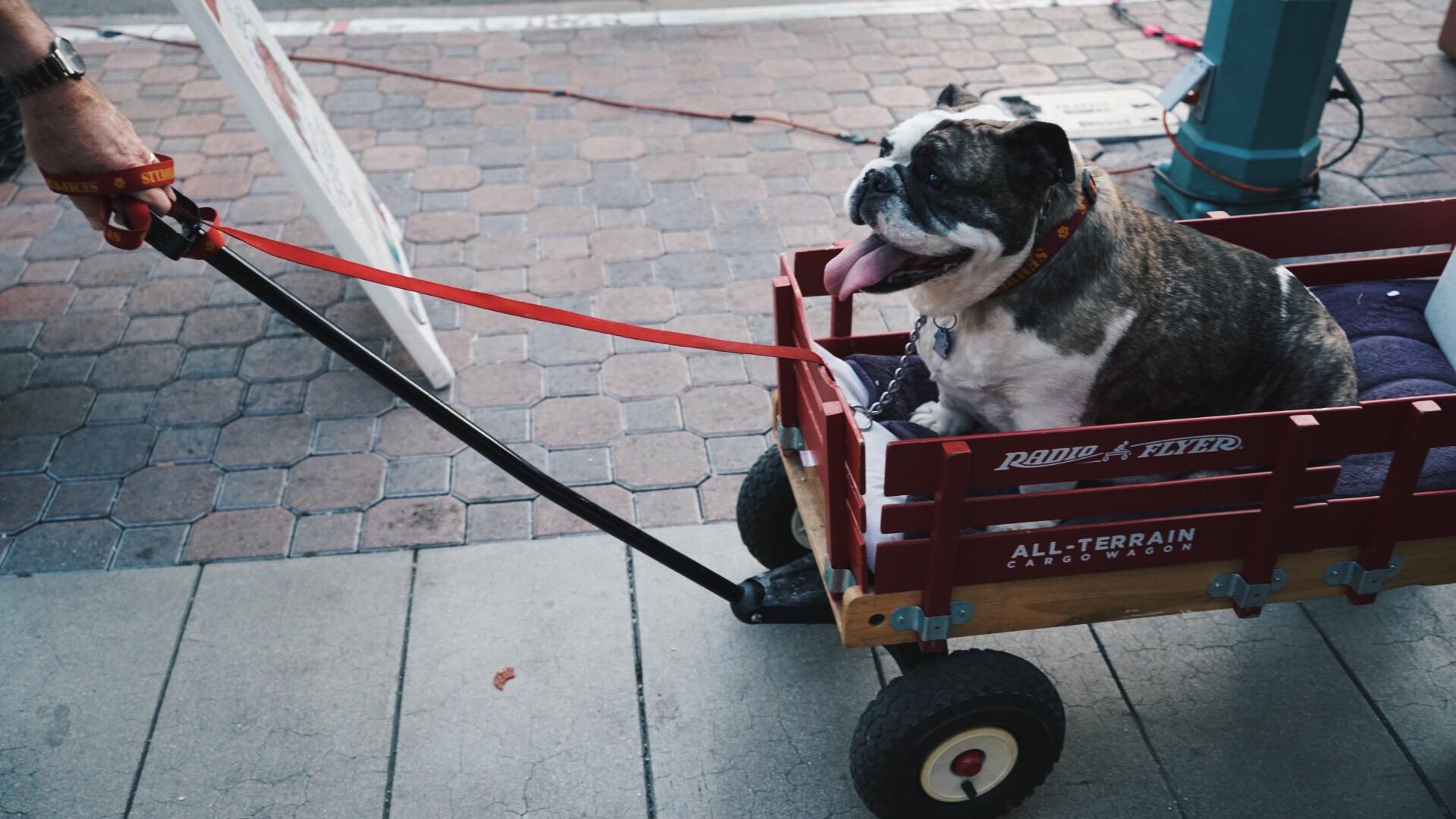 puppy patrol