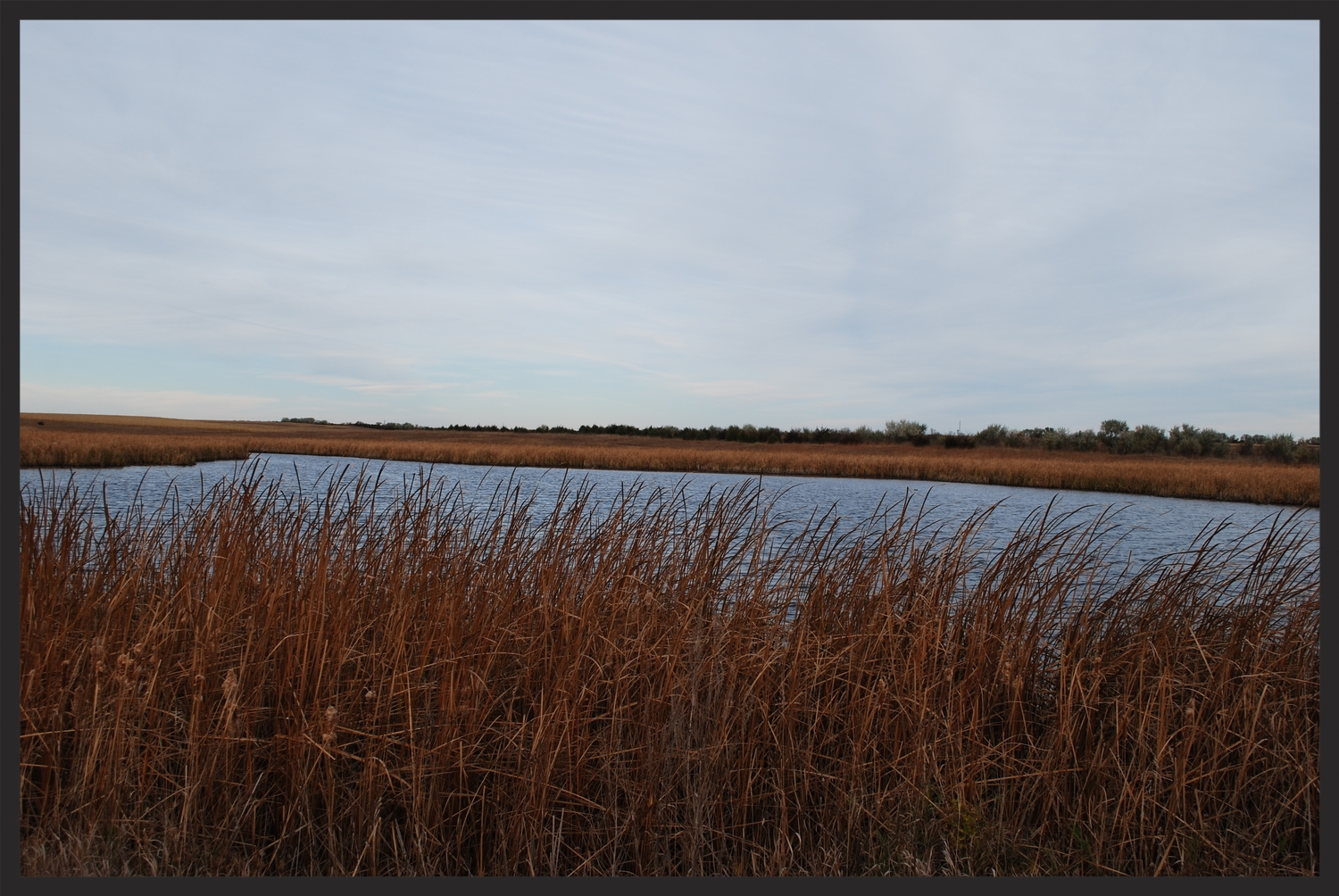 Water and cattails are a must for great pheasant habitat