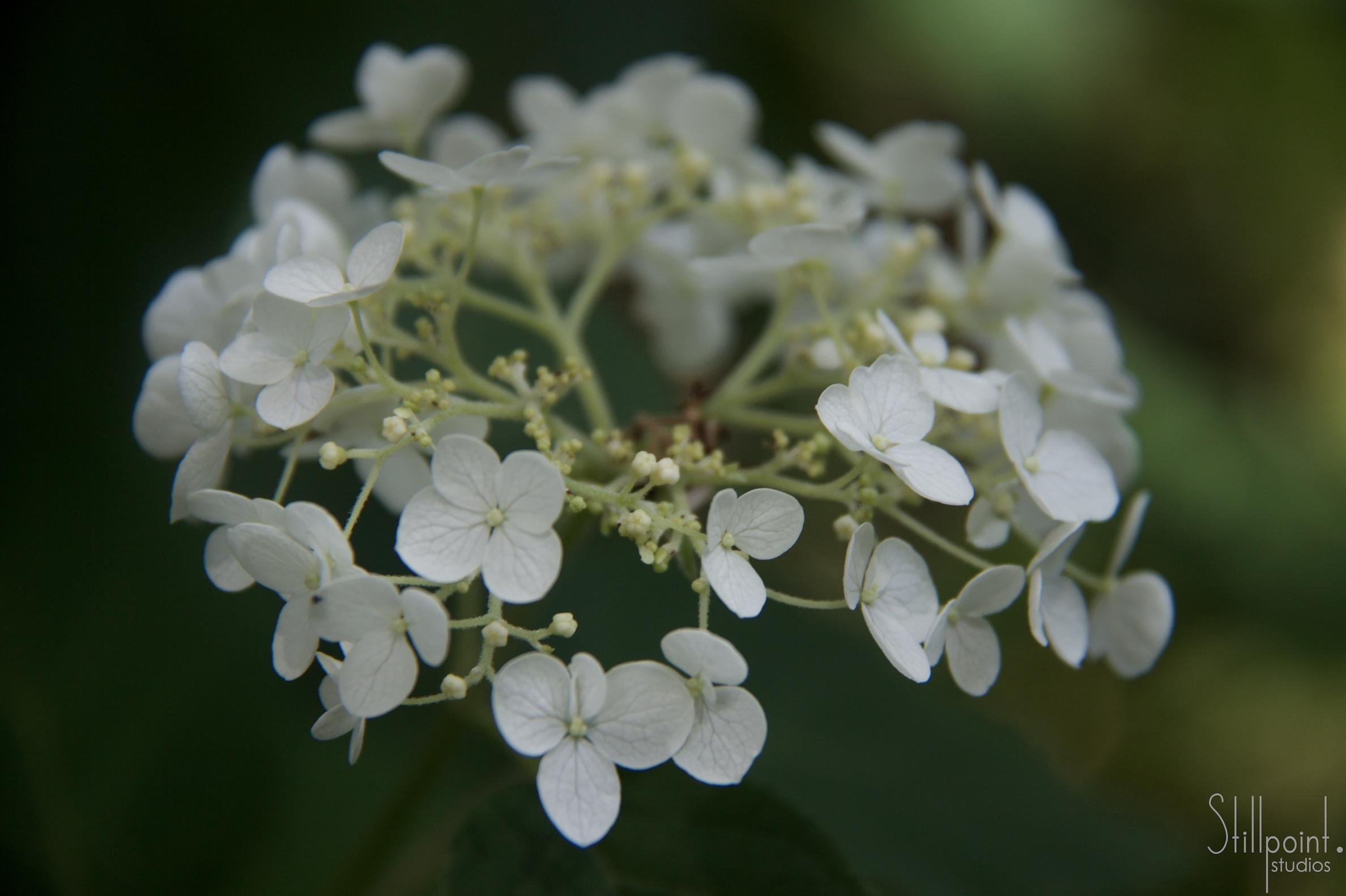 ring of petals