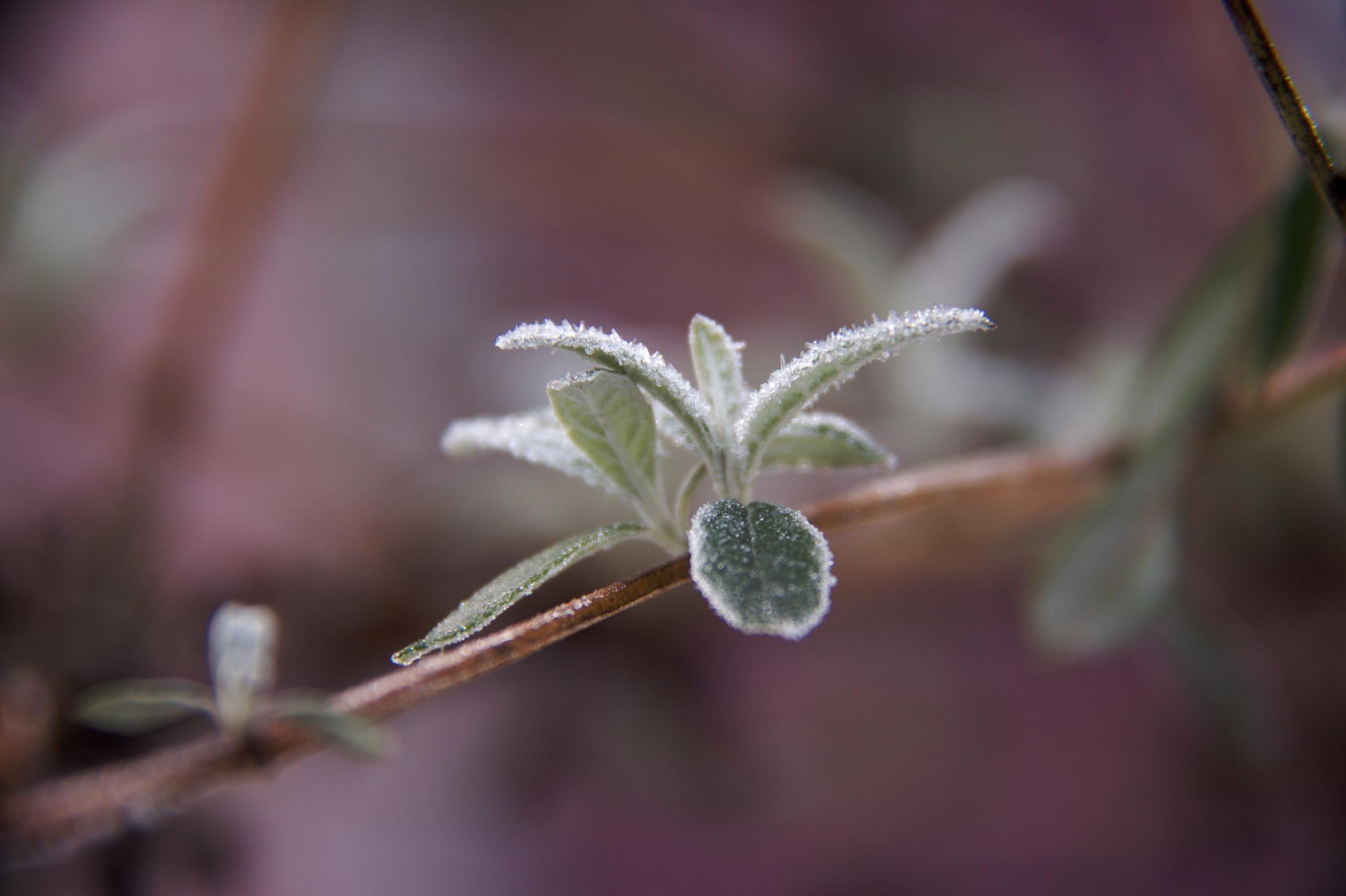 winter-gilt