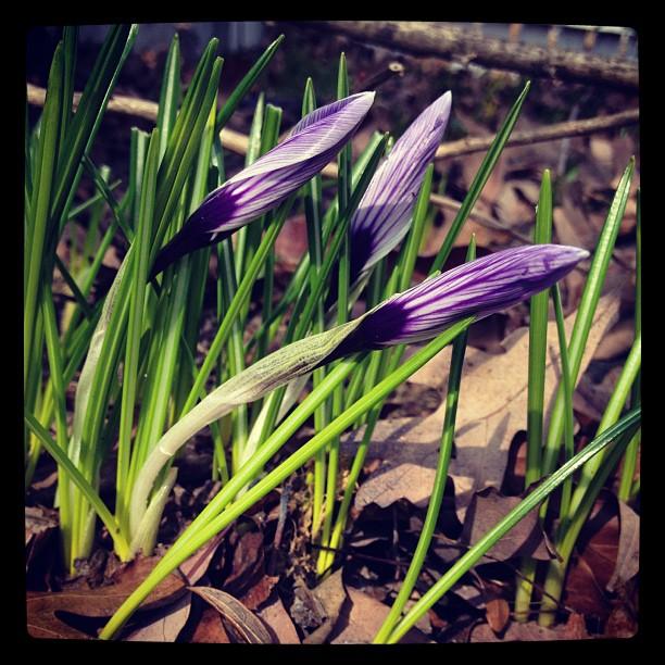 spring shots