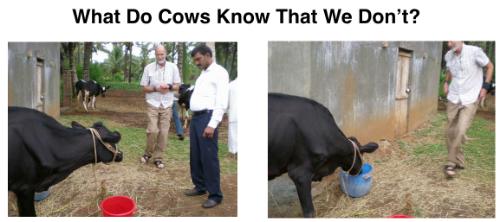 Animals Love Structured Water