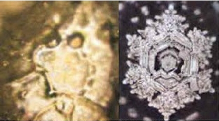 Water in a natural state reveals a crystalline structure, whereas polluted water reveals a chaotic state.  Photos from Emoto's lab.