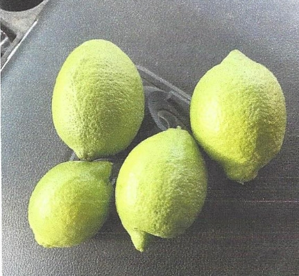 The lemons shown in the photos below are ones from the lemon trees planted only a year ago.