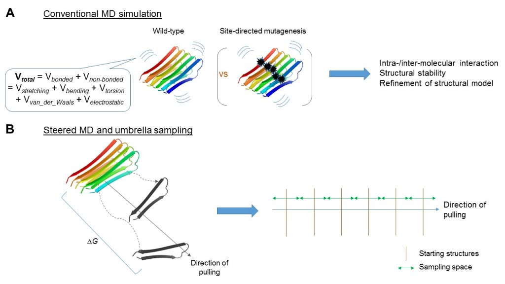 Figure 2. Conventional and steered molecular dynamics (MD) simulations address different questions.  (A) Conventional MD simulation involves calculation of energy, both bonded and non-bonded, under parameterization defined by force-fields as exemplified. Coupling with, for example, site-directed mutagenesis, it is geared to study biochemical properties of the aggregates along the time-scale at atomistic resolution. (B) Alternatively, steered MD simulations, coupled with umbrella sampling could be used to address the aggregative process, e.g., by considering free energy changes (ΔG) throughout the process. PDB entry 2BEG was illustrated here.