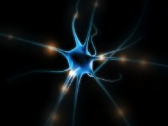 Parkinson's disease is characterized by neuron death. (Photo courtesy of Taylor Maley through Flickr Creative Commons)