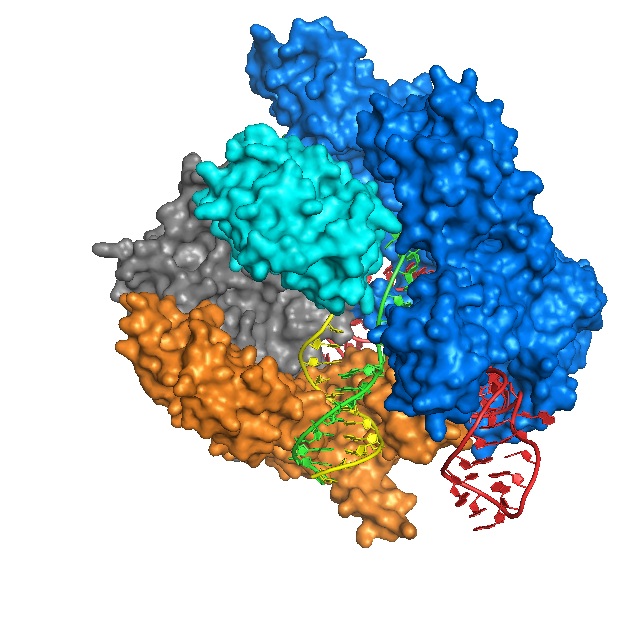 https://upload.wikimedia.org/wikipedia/commons/9/96/Cas9_Anders_DNA_bound_structure.png