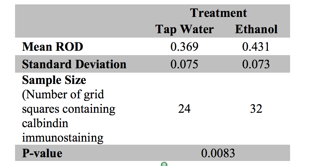 Table 1: Mean relative optical density (ROD), standard deviation (SD), sample size, and p-value of calbindin immunostaining of P0 mouse cerebella exposed to tap water and ethanol from each litter.  Table of mean relative optical density (ROD), standard deviation, sample size, and p-value for each of the four calbindin immunostained P0 mouse cerebella observed. The ImageJ software program quantifies the light intensity of pixels along a continuum from 0 to 1. Darker pixels are represented by lower values with 0 representing the darkest intensity. The ROD of each grid square was calculated using the values extracted from ImageJ. The intensity of the calbindin immunostaining was determined based on the assumption that the darker the intensity of the stain, the greater the calbindin protein expression.